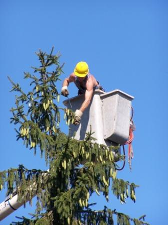 Tree Removal Technician Whitby